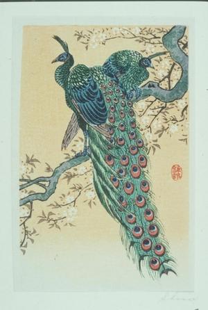 小原古邨: Peacocks - Art Gallery of Greater Victoria