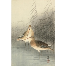 小原古邨: Birds and Reeds - Art Gallery of Greater Victoria