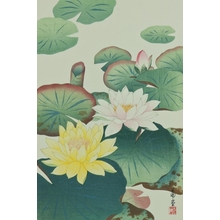 Nishimura Hodo : Water Lily - Art Gallery of Greater Victoria