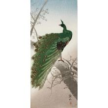 Ito Sozan: Peacock - Art Gallery of Greater Victoria