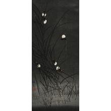 Watanabe Shoka: Fireflies - Art Gallery of Greater Victoria