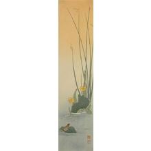 Koho: Frog on Lotus - Art Gallery of Greater Victoria