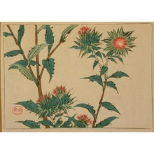 Shibata Zeshin: Thistles - Art Gallery of Greater Victoria