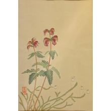 Masakiyo: Thistle (?) - Art Gallery of Greater Victoria