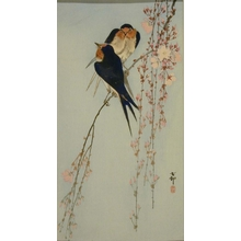Ohara Koson: Swallows and Hanging Cherry Blossoms - Art Gallery of Greater Victoria