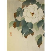 Koho: Peony in Rain - Art Gallery of Greater Victoria
