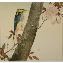 静湖: Woodpecker - Art Gallery of Greater Victoria