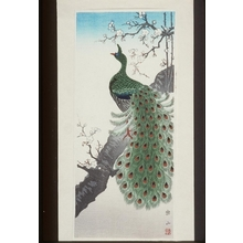 Ito Sozan: Peacock - Art Gallery of Greater Victoria