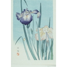 Kono Bairei: Iris - Art Gallery of Greater Victoria