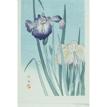 Kono Bairei: Iris - Art Gallery of Greater Victoria
