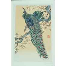 Ohara Koson: Peacocks - Art Gallery of Greater Victoria