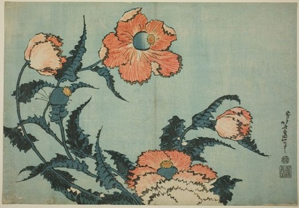 Katsushika Hokusai: Poppies, from an untitled series of large flowers - Art Institute of Chicago