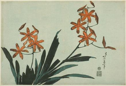 葛飾北斎: Orange Orchids, from an untitled series of large flowers - シカゴ美術館