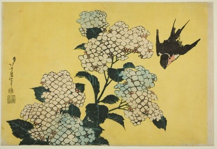 Katsushika Hokusai: Hydrangea and Swallow, from an untitled series of large flowers - Art Institute of Chicago