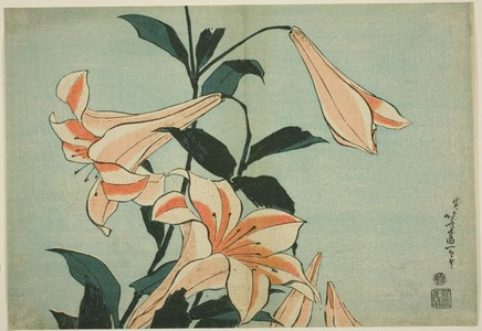 Katsushika Hokusai: Lilies, from an untitled series of Large Flowers - Art Institute of Chicago