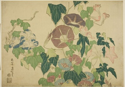 Katsushika Hokusai: Morning Glories and Tree-frog, from an untitled series of Large Flowers - Art Institute of Chicago