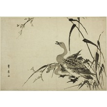 Utagawa Toyohiro: Wild Geese and Reeds - Art Institute of Chicago