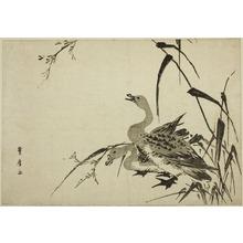 歌川豊広: Wild Geese and Reeds - シカゴ美術館