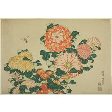 Katsushika Hokusai: Chrysanthemums and Bee, from an untitled series of Large Flowers - Art Institute of Chicago