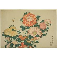 葛飾北斎: Chrysanthemums and Bee, from an untitled series of Large Flowers - シカゴ美術館