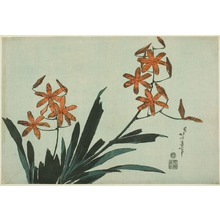 Katsushika Hokusai: Orange Orchids, from an untitled series of large flowers - Art Institute of Chicago