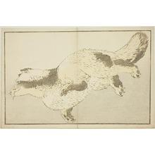 葛飾北斎: Fox, from The Picture Book of Realistic Paintings of Hokusai (Hokusai shashin gafu) - シカゴ美術館