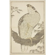 Katsushika Hokusai: Hawk, from The Picture Book of Realistic Paintings of Hokusai (Hokusai shashin gafu) - Art Institute of Chicago