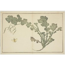 葛飾北斎: Fly and Herb, from The Picture Book of Realistic Paintings of Hokusai (Hokusai shashin gafu) - シカゴ美術館