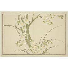 葛飾北斎: Flowers, from The Picture Book of Realistic Paintings of Hokusai (Hokusai shashin gafu) - シカゴ美術館
