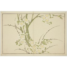 Katsushika Hokusai: Flowers, from The Picture Book of Realistic Paintings of Hokusai (Hokusai shashin gafu) - Art Institute of Chicago