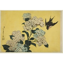 葛飾北斎: Hydrangea and Swallow, from an untitled series of large flowers - シカゴ美術館