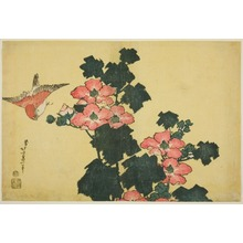 Katsushika Hokusai: Cotton Roses and Sparrow, from an untitled series of Large Flowers - Art Institute of Chicago