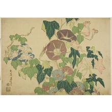葛飾北斎: Morning Glories and Tree-frog, from an untitled series of Large Flowers - シカゴ美術館