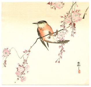 Ohara Koson: Orange Bird and Cherry Blossom - Artelino