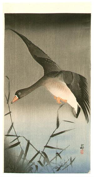 小原古邨: White-fronted Goose - Artelino
