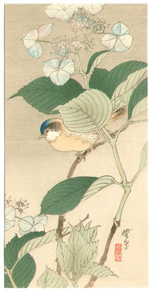 無款: Bird and Hydrangea - Artelino