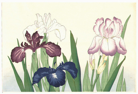 Unknown: Irises - Artelino