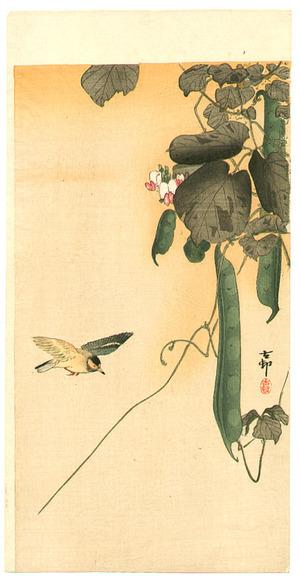 小原古邨: Hummingbird and Green Beans - Artelino