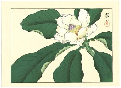 Sakai Hoitsu: Magnolia - Artelino