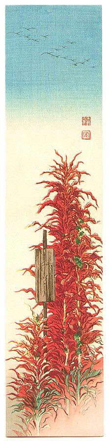 古峰: Red Plant - Artelino