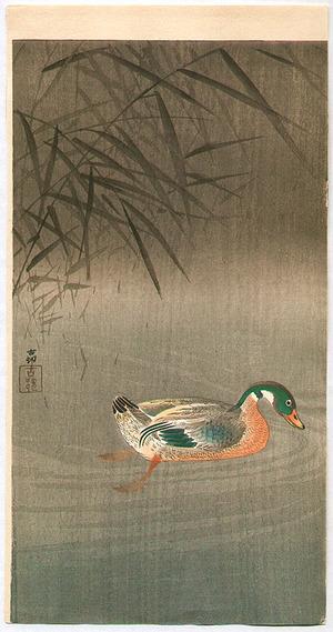 Ohara Koson: Swimming Mallard Duck - Artelino