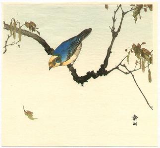 静湖: Blue and Yellow Bird - Artelino