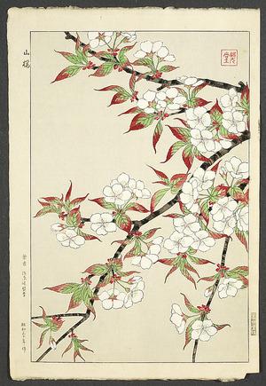 Kawarazaki Shodo: Wild Cherry Blossoms - Artelino