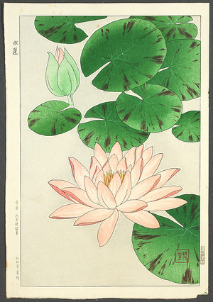 Kawarazaki Shodo: Water Lily - Artelino