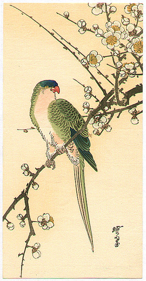 河鍋暁翠: Parakeet on a Plum Branch - Artelino