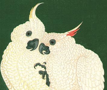 小原古邨: Two White Cockatoos on a Red Bar - Artelino