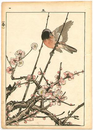 Imao Keinen: Bird and Cherry Blossoms - Artelino