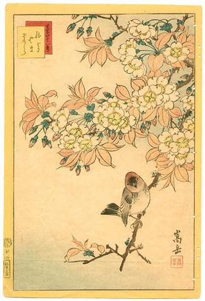 Nakayama Sugakudo: Robin and Cherry - Artelino