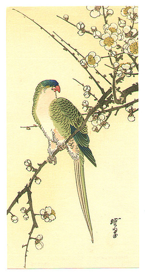 河鍋暁翠: Parakeet on a Plum Branch - Artelino