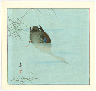 Ohara Koson: Diving Mallard (blue version) - Artelino
